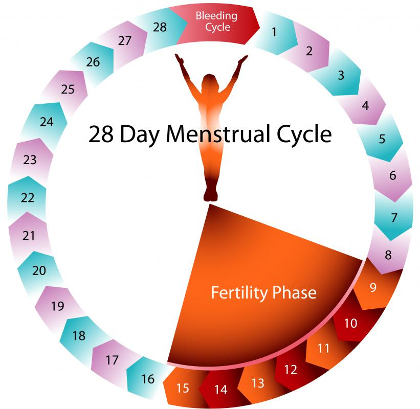 A woman's menstrual cycle may last for 28 days.