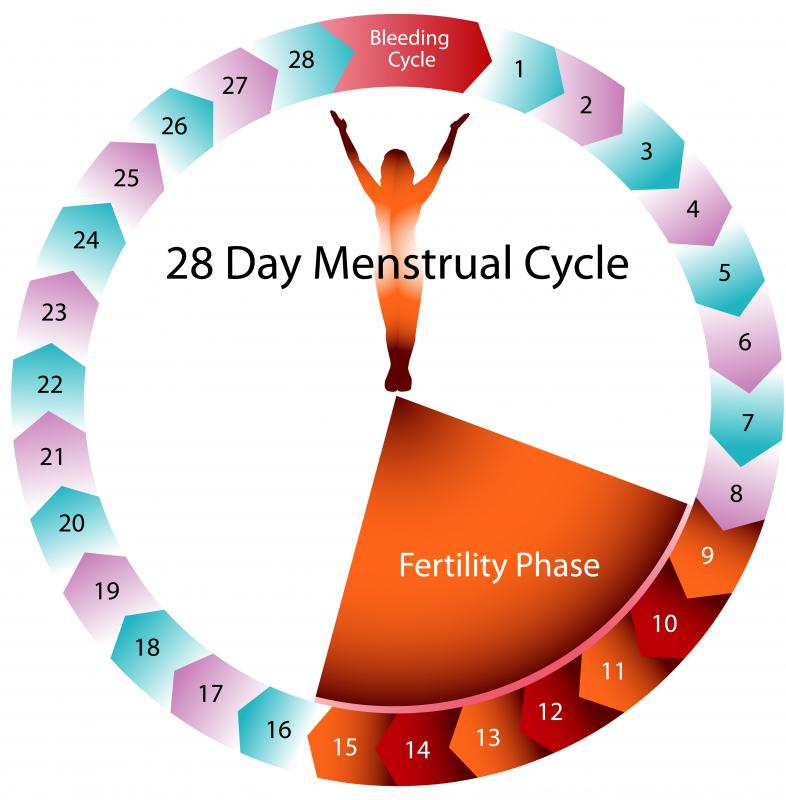 An ovulation detector can help determine when a woman is most fertile.