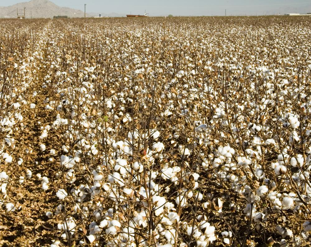 Alabama's economy was once heavily reliant on cotton growing.