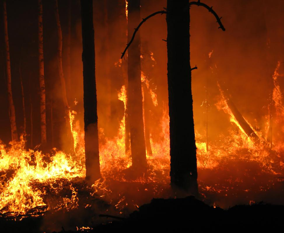Fire wardens help ensure that forest fires are quickly identified and managed.