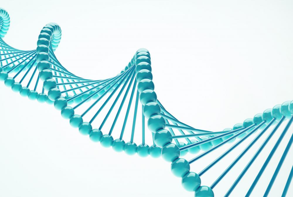 A portion of DNA can undergo gene duplication.