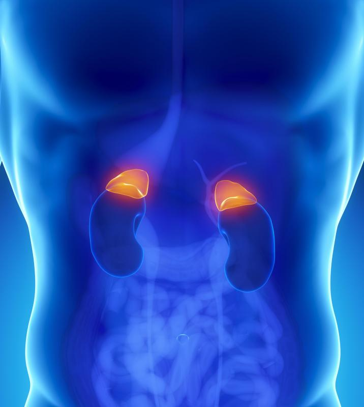 The adrenal glands are responsible for secreting adrenaline, which is where its name is derived.