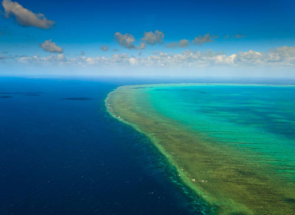 The Great Barrier Reef is often called the world's largest organism.