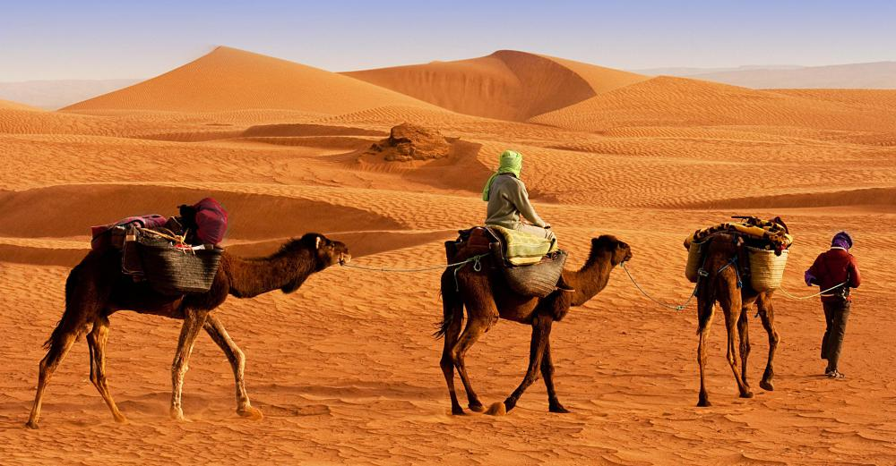 Camels have been used to transport goods over arid terrain for thousands of years.