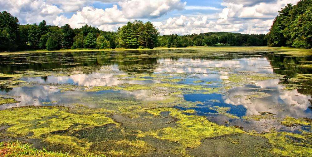 Algae in a lake.