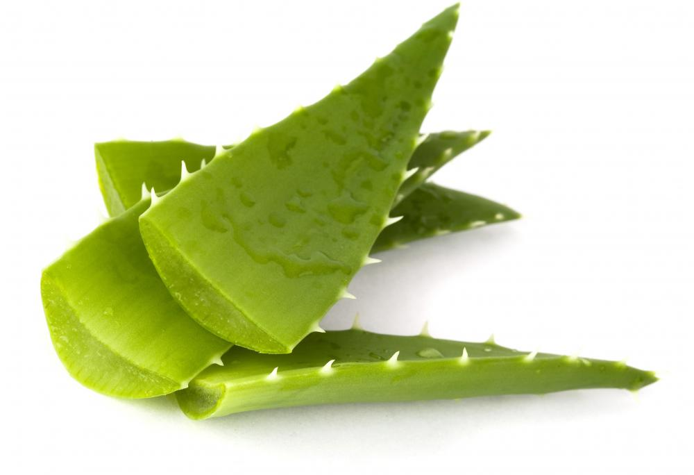 Aloe vera is often added to skin care products to smooth and moisturizing the skin.