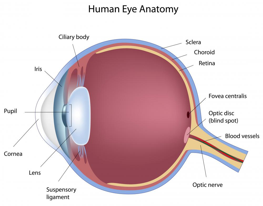 A diagram of a human eye.