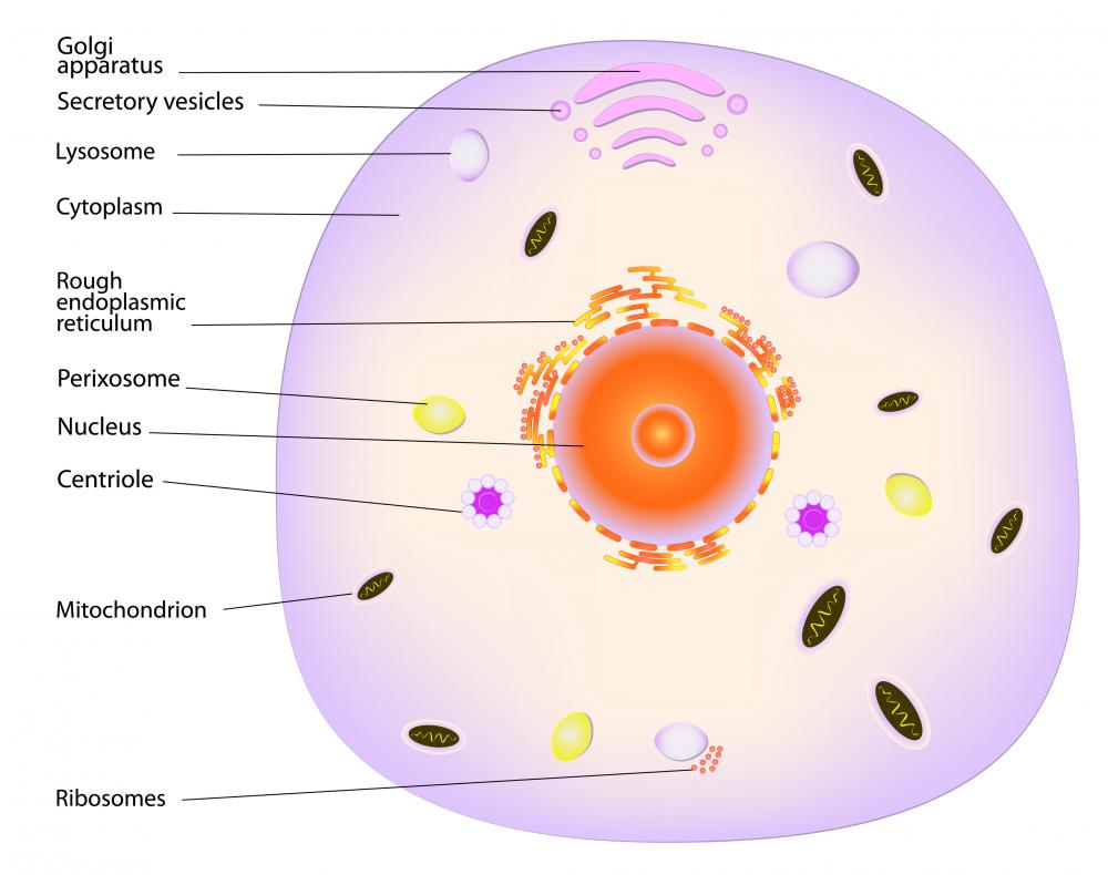 Protein synthesis starts in the nucleus and ends in the cytoplasm.