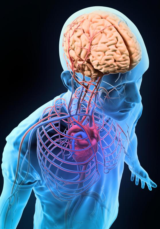 The neck pulse can be taken via carotid artery, which carries blood from the heart to the brain.