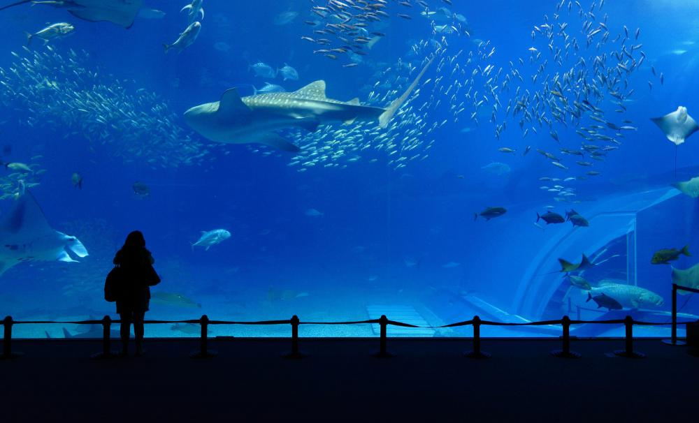 Learn about aquariums