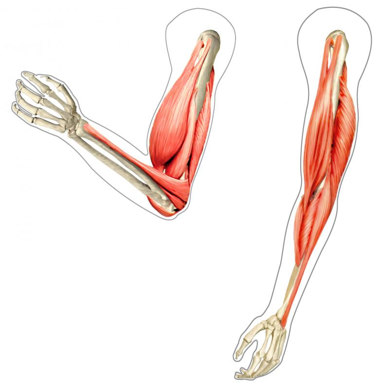 Bicep curls are a type of flexion exercise that strengthens the elbow flexors.
