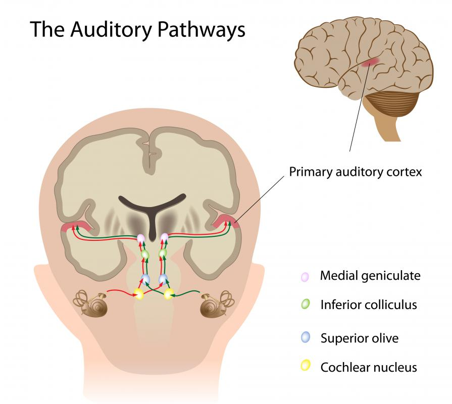 Auditory processing issues stem from problems in the auditory pathways.