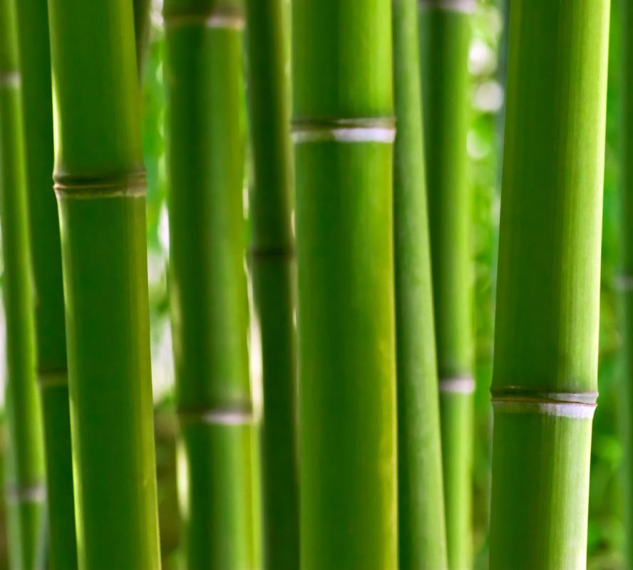 A closeup of bamboo edging.