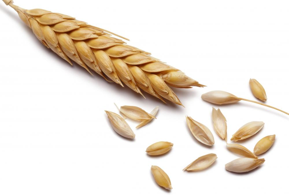 Barley, which is grown in Greece.