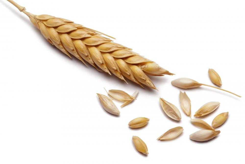 Barley, which can be used to make whole grain bread.