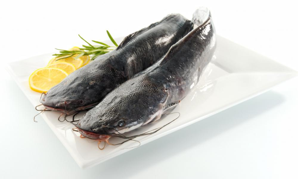 What are the different types of fish species with pictures for What kind of fish is basa