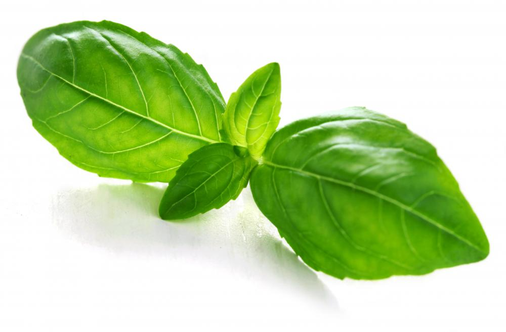 Whole basil leaves are often added to vegetarian pizzas.