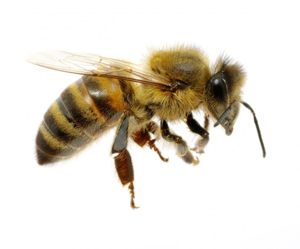 Propolis is a waxy substance produced by bees.