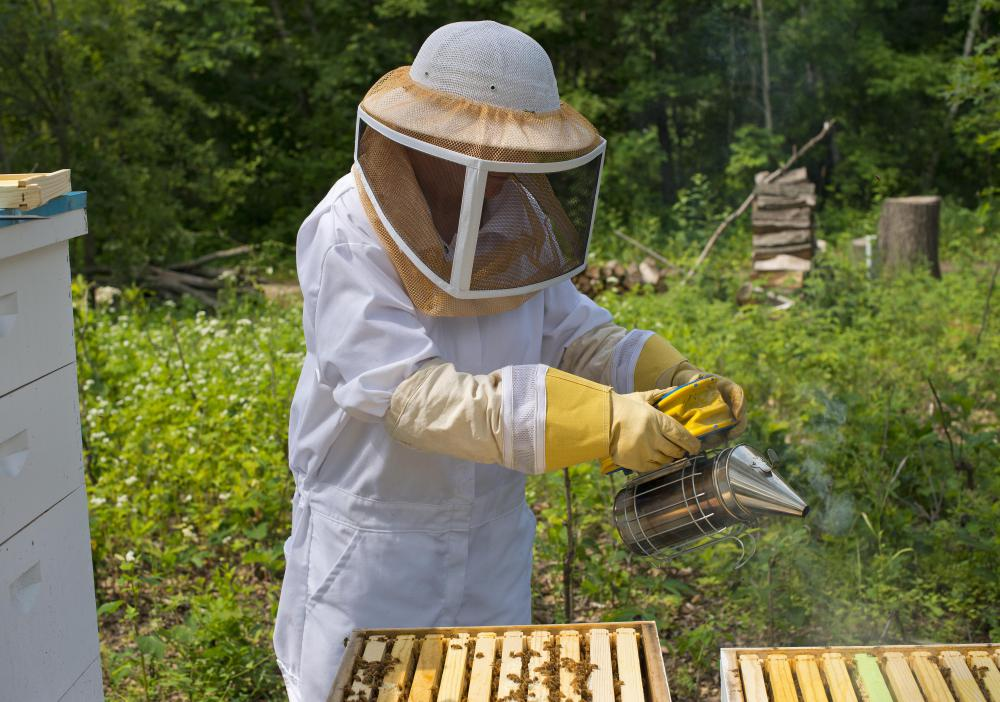Beekeepers set up apiaries to house bees.
