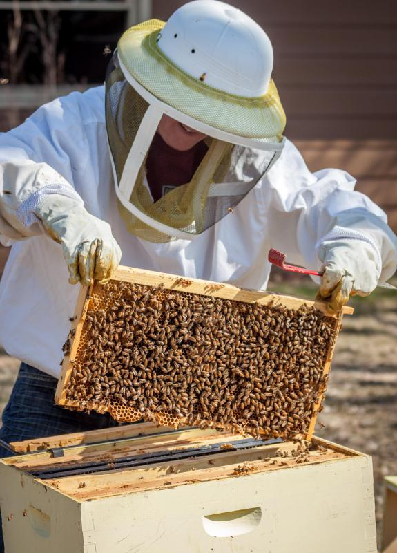 A beekeeper may introduce a mixture of 10 percent already finished product and 90 percent pasteurized honey during the creaming process.