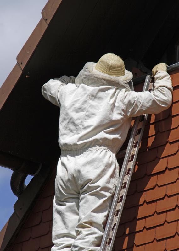 A pest control operator might be hired to remove wasps or bees from a home's exterior.