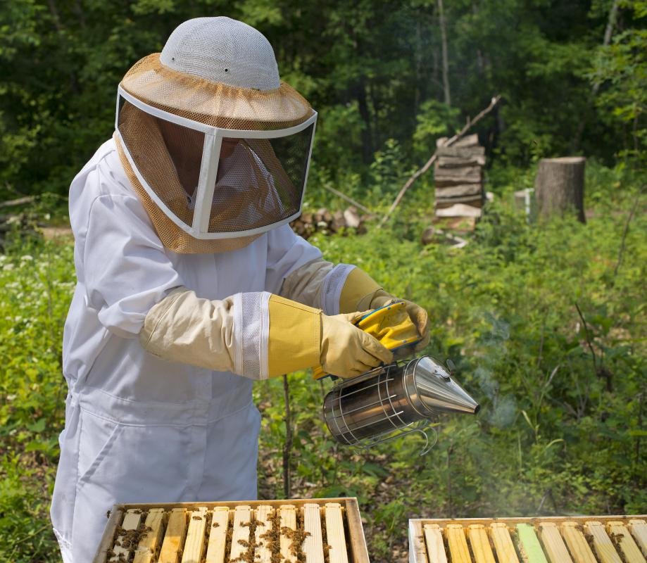 Beekeeping is common in Greece.