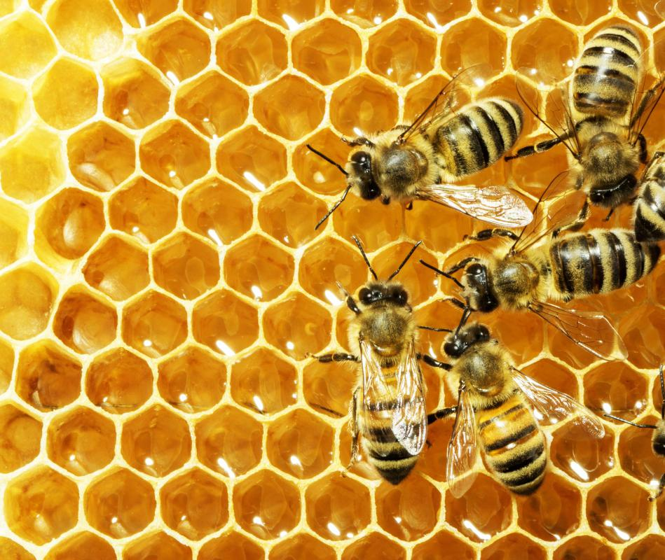 Bees secrete beeswax from their abdominal glands.