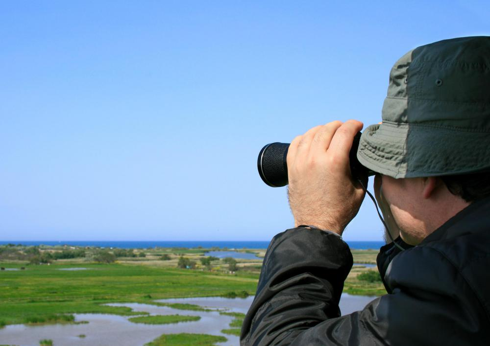 Ornithologists observe birds in the field.