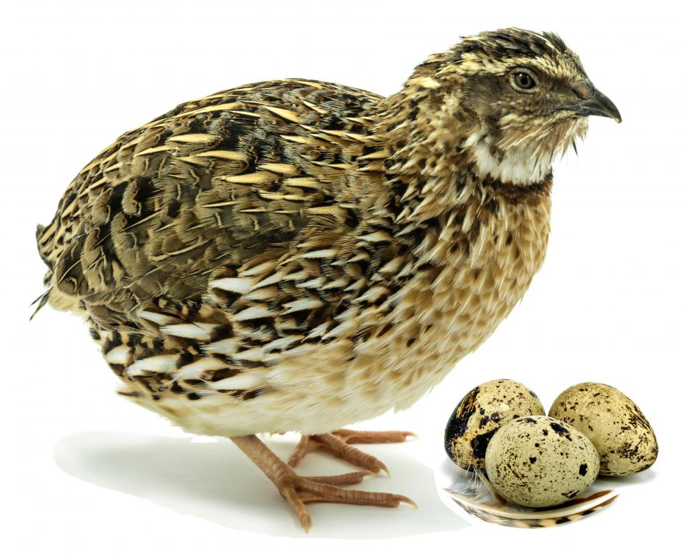 When birds produce eggs, the eggs need to kept warm until they hatch.