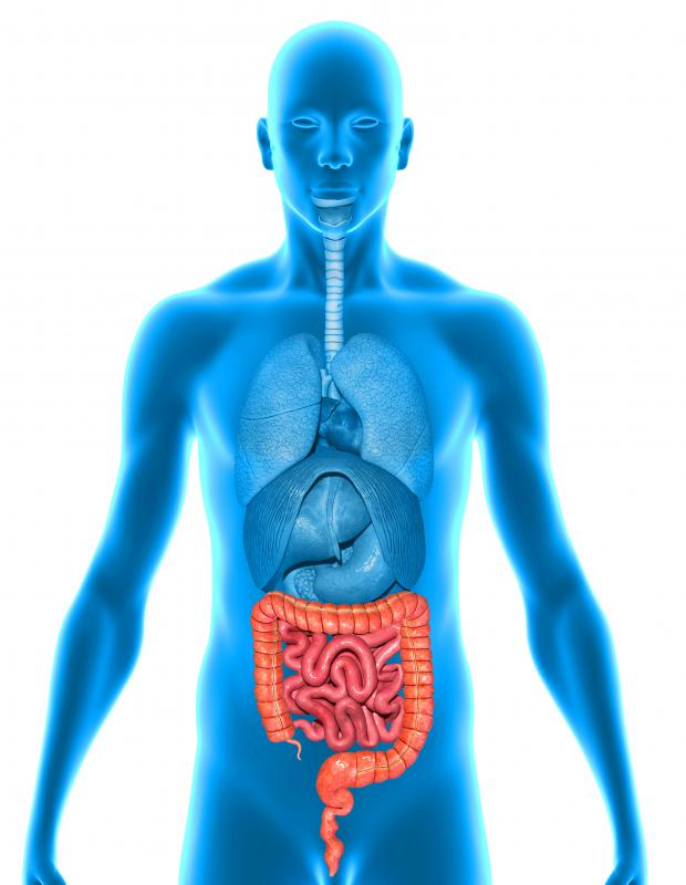 Intestinal irregularities may occur as a result of a metabolic disorder.