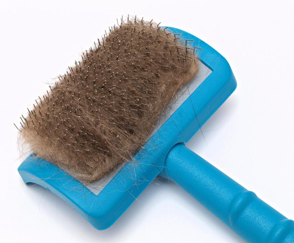 Brushing is typically part of a mobile pet groomer's work.