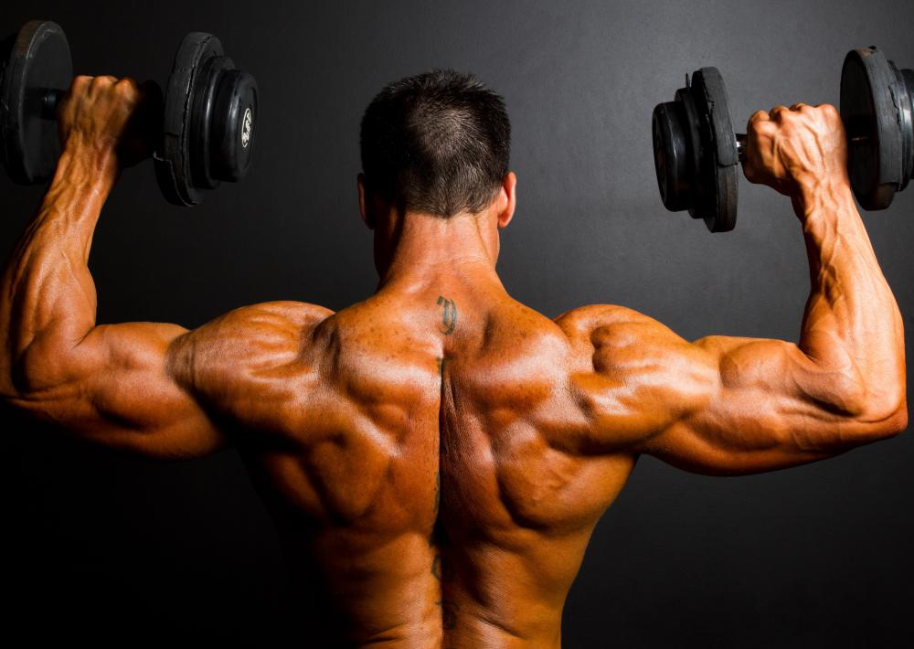 Posterior Deltoid What is The Posterior Deltoid