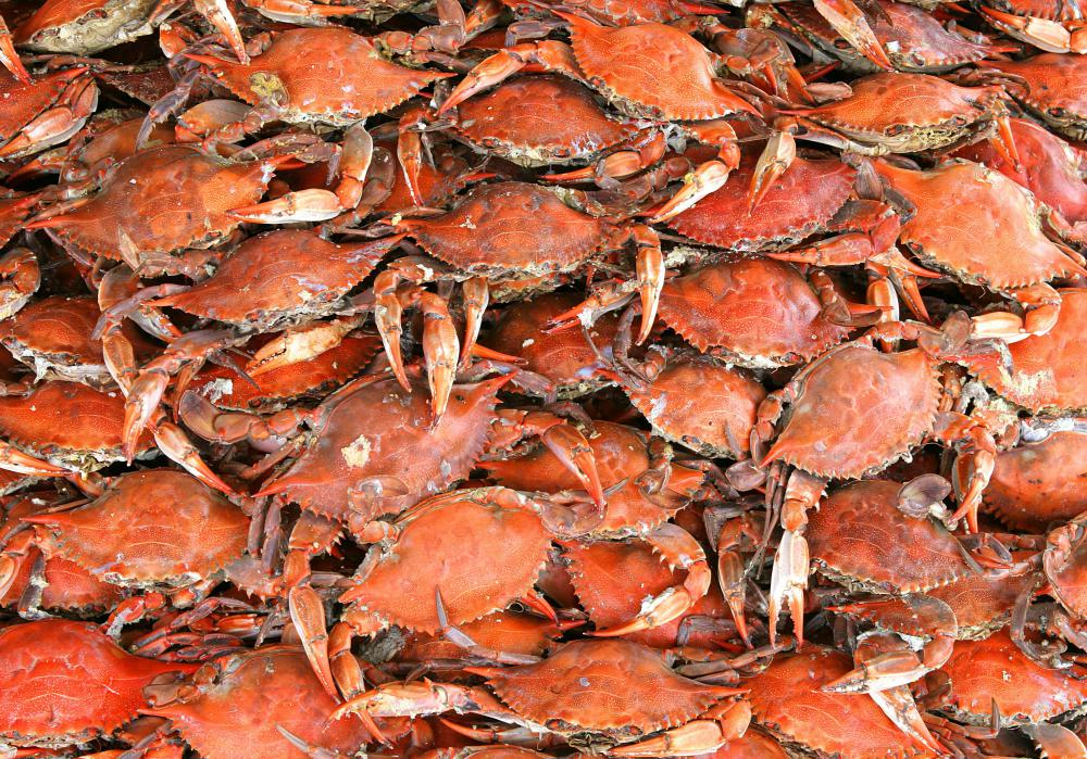 Crab dressing starts with removing its legs and claws.