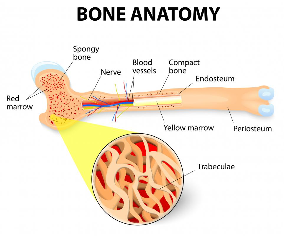 What Are The Different Types Of Synthetic Bone Graft
