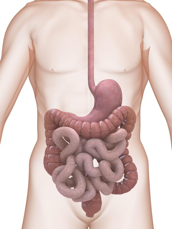 Digestive enzymes are found throughout the entire digestive tract.