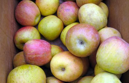 Box of Fuji apples.