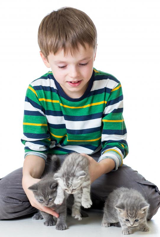 Brushing a kitten's teeth will make it easier to continue over the cat's lifetime.