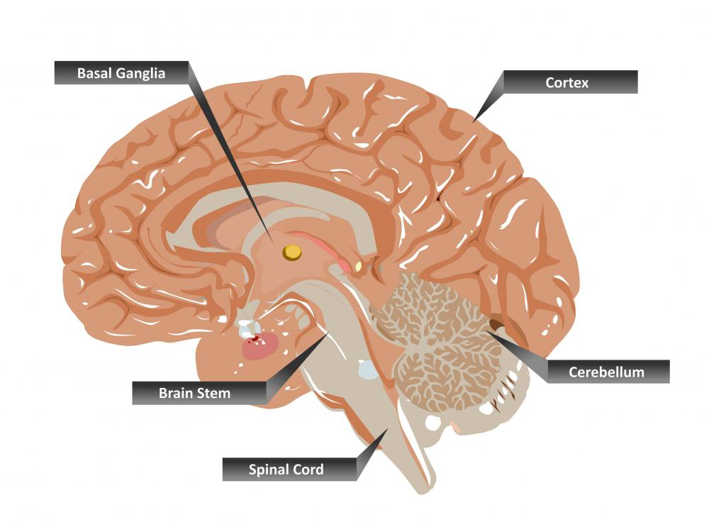 Hypokinesia can occur from diseases of the basal ganglia.