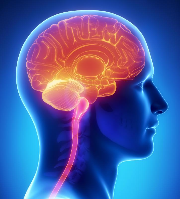Untreated syphilis may result in brain damage.