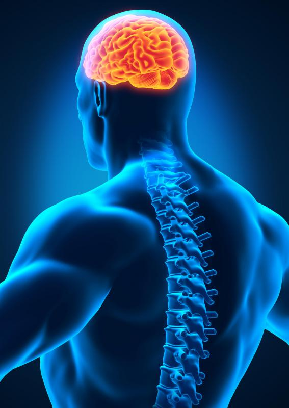 Motor neuron lesions interrupt signals being sent by the brain and spinal cord.