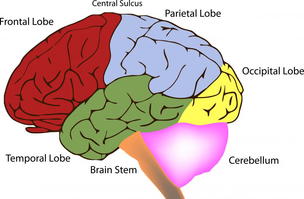 A tumor at the front of the brain will impact the frontal lobe.
