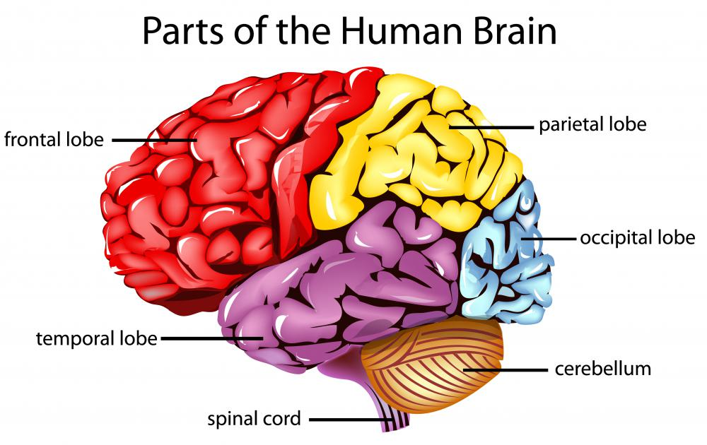Frontal lobe injuries may include lesions caused by disease.