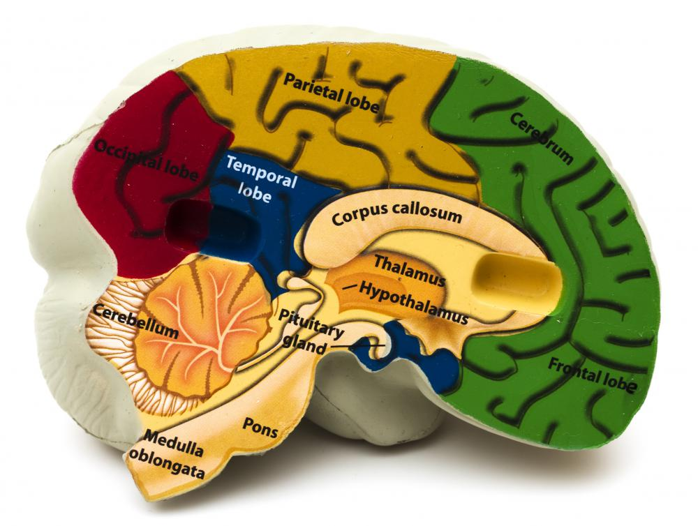 The areas of the brain.