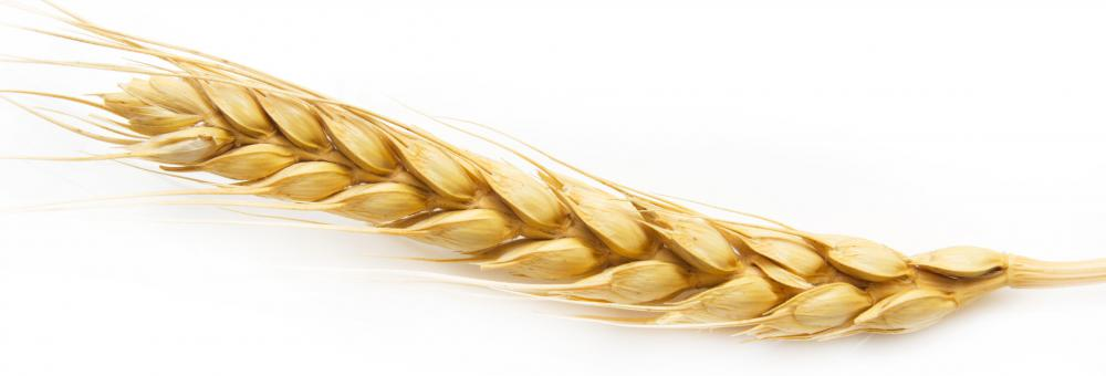 Barley, which is used to make barley water, a homeopathic treatment for swelling.
