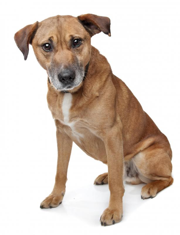 A mutt is a mixed-breed dog that is not usually bred deliberately.