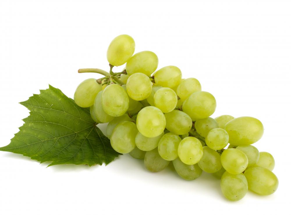 Thompson grapes are among the most popular green-skinned grapes.