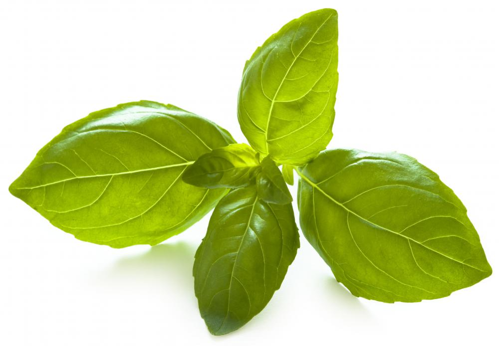 Basil, which contains eugenol.
