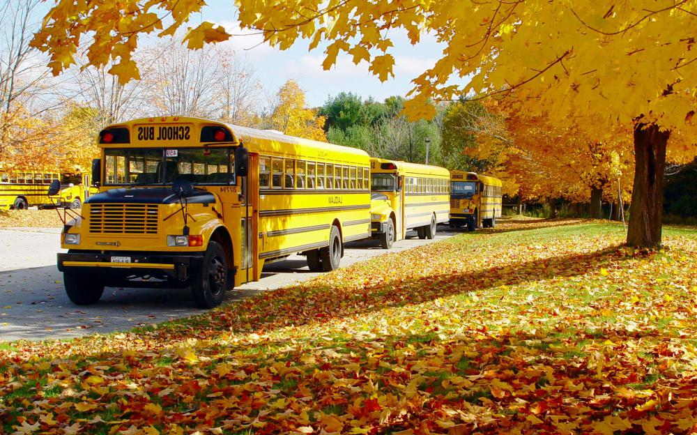 School bus drivers work in the morning and afternoon.