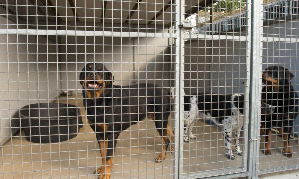 Animal shelters may send animals that have been euthanized to rendering plants.