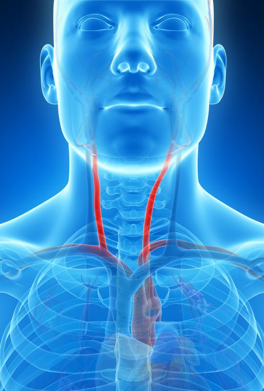 The carotid arteries split into internal and external carotid arteries, creating a carotid artery sinus where the division occurs.